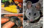 كيفية التعامل مع الفئران في البلد والموقع