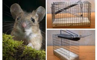 مصيدة فئران قفص