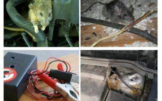 كيف تتخلص من الفئران تحت غطاء السيارة