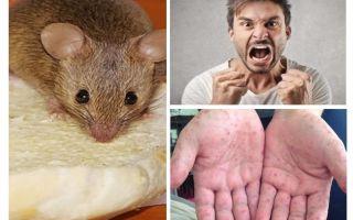 ما يمكن أن يصاب من الفئران