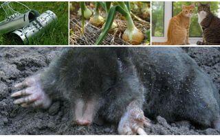 علاجات للشامات في المنزل الريفي الصيفي والحديقة