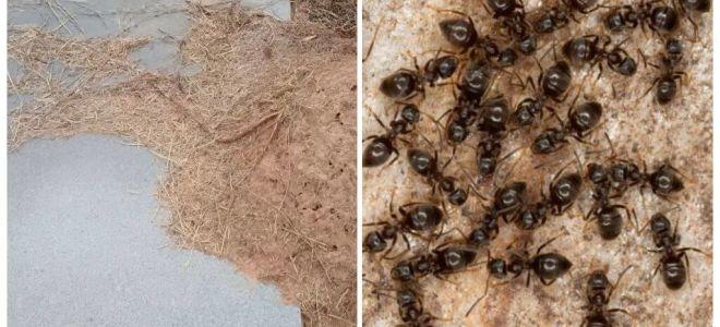 كيفية التخلص من النمل على القبر