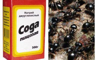 صودا ضد النمل في الحديقة