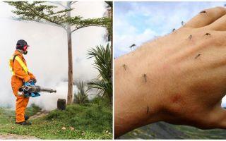 وسائل لتجهيز المنطقة من البعوض والقراد