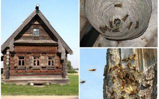 كيفية الحصول على النحل من المنزل الخشبي وأماكن أخرى