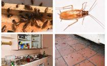 التخلص من الصراصير في الشقة مرة واحدة وإلى الأبد