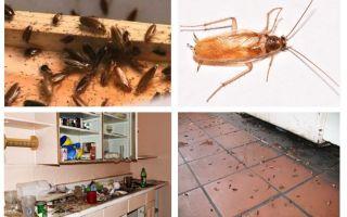 ماذا تفعل إذا رأيت صرصورًا في المطبخ