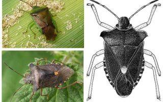 حشرات الغابات
