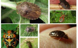 الحشرات تطير أم لا