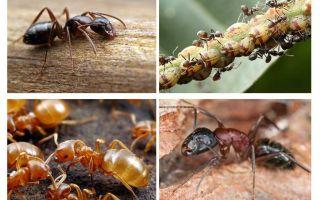 حديقة النمل الضرر والاستفادة