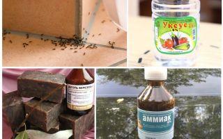 قتال النمل في منزل أو شقة
