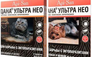 دانا الترا نيو قطرات من البراغيث للقطط والكلاب