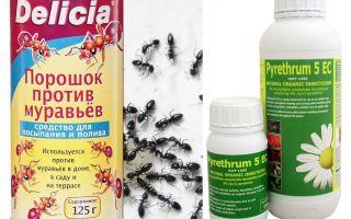 سم النمل في شقة أو منزل