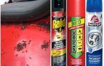 كيفية إخراج النمل من السيارة