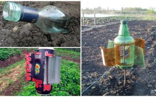 كيفية إزالة الشامة من داشا أو الحديقة