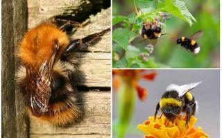 كيفية إزالة نحلة من المنزل