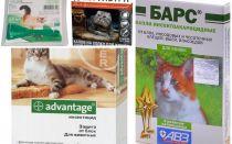 قطرات على يذبل من البراغيث للقطط والقطط