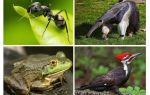 من يأكل النمل