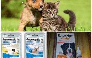 كيف وكيف لحماية الكلب من البعوض والذباب