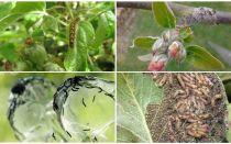 كيفية التخلص من اليرقات على شجرة التفاح