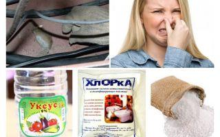 كيف تتخلص من رائحة الفئران؟