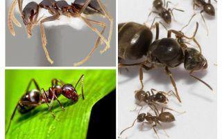 هل ينام النمل