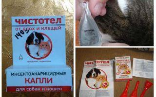 قطرات من بقلة الخطاطيف من البراغيث للقطط والكلاب