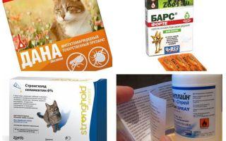 أفضل العلاجات برغوث للقطط