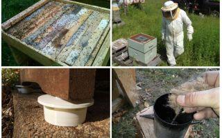 كيفية التخلص من النمل في العلاجات الشعبية المنحلة