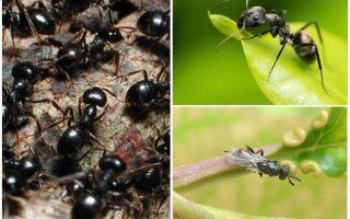 أنواع النمل في روسيا والعالم
