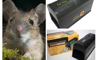 مصيدة فئران الكهربائية