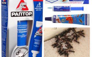 أفضل منتجات النملة