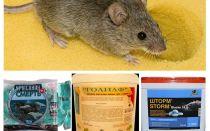 السم من الفئران