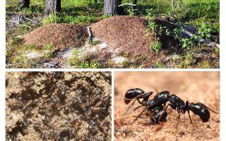 جهاز عش النمل