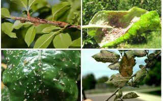 كيف تتخلص من حشرات المن في الاشجار