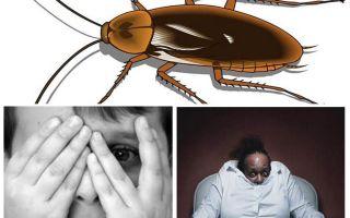 لماذا يخاف الناس من الصراصير