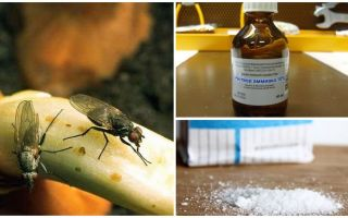 كيف تتخلص من ذباب البصل؟