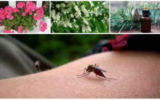 كيفية التعامل مع البعوض في شقة أو منزل