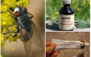 علاج ل gadflies و horseflies للبشر