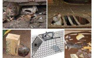 كيفية إزالة الفئران من العلاجات الشعبية الطابق السفلي