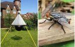 الفخاخ محلية الصنع ل gadflies و gadflies