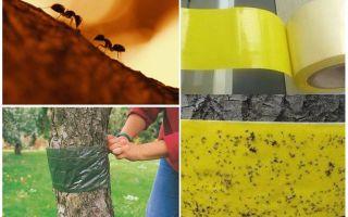 كيفية التعامل مع النمل في الأشجار في الحديقة
