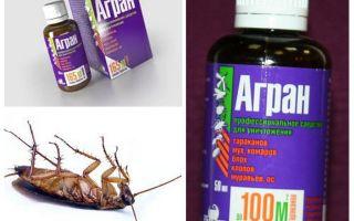 علاج Agran عن الصراصير