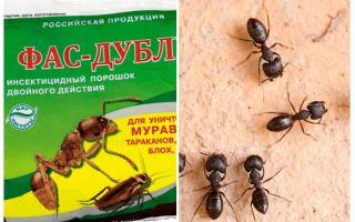 يعني Fas مزدوجة من النمل
