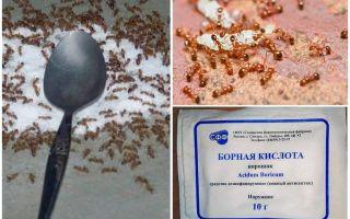 كيفية التعامل مع النمل الأحمر