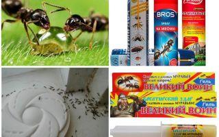 كيف تدمر النمل و النمل