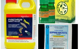 العلاجات المهنية للصراصير