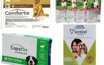 كيفية التخلص من البراغيث في الكلاب ، والوسيلة الأكثر فعالية من البراغيث