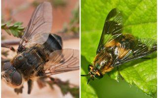 الفرق بين اليعسوب والمكفوفين