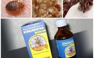 علاج Cucaracha للبق